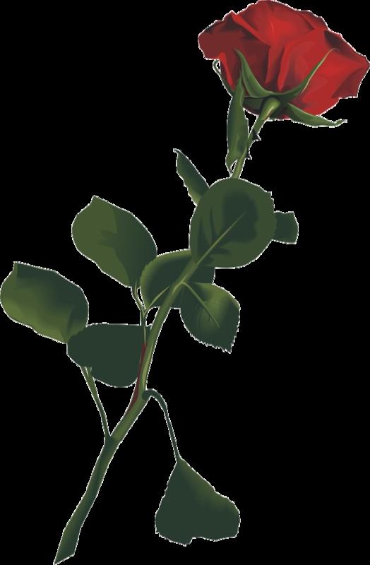 Tube fleurs - Dessin de rose rouge ...