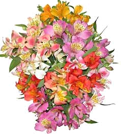 Tube bouquet d'Altroemeria