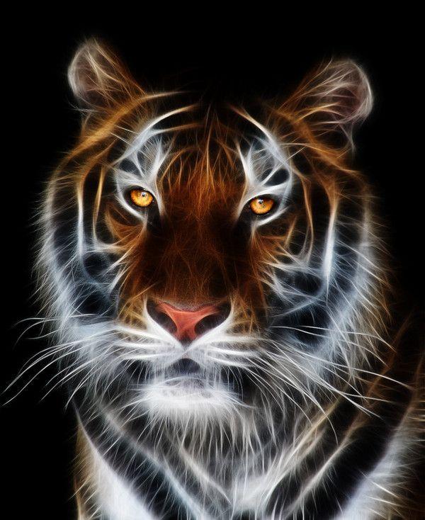 Connu de tigre GW93