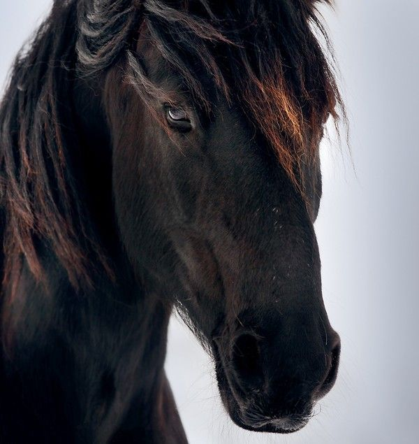 Animaux - Image tete de cheval ...