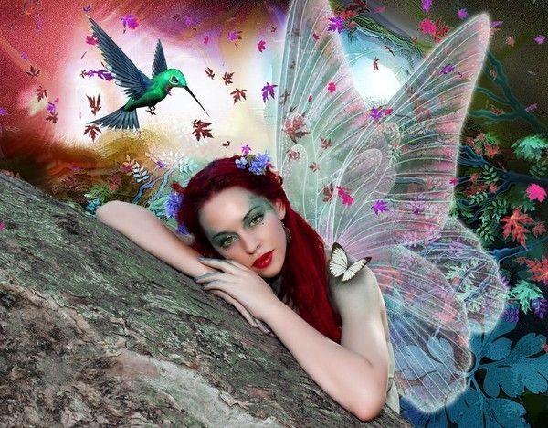 La fée et le colibris