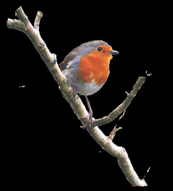 Tube oiseau rouge gorge