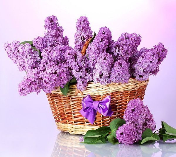 Bouquet de Lilas