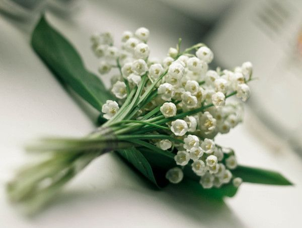 Bouquet de muguet bouquet de muguet - Bouquet de muguet photo ...