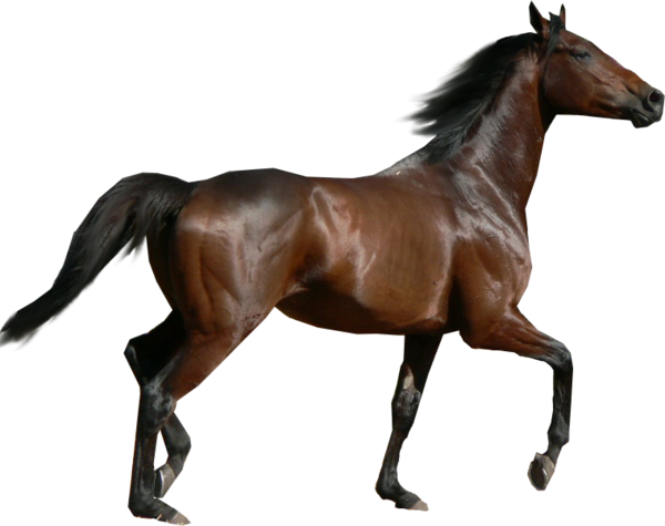 Tube cheval