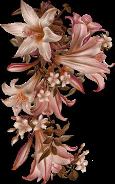 Tube fleur lys rose