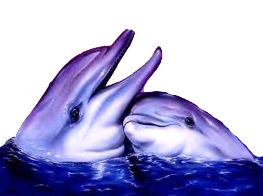 Tube de dauphin
