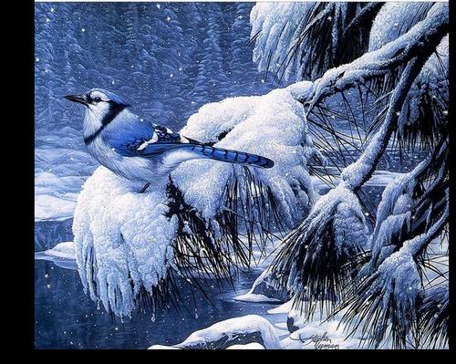Tube oiseaux et neige