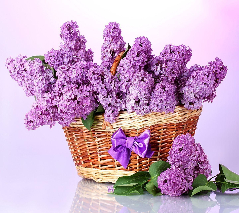 Bouquet de lilas for Bouquet de fleurs lilas