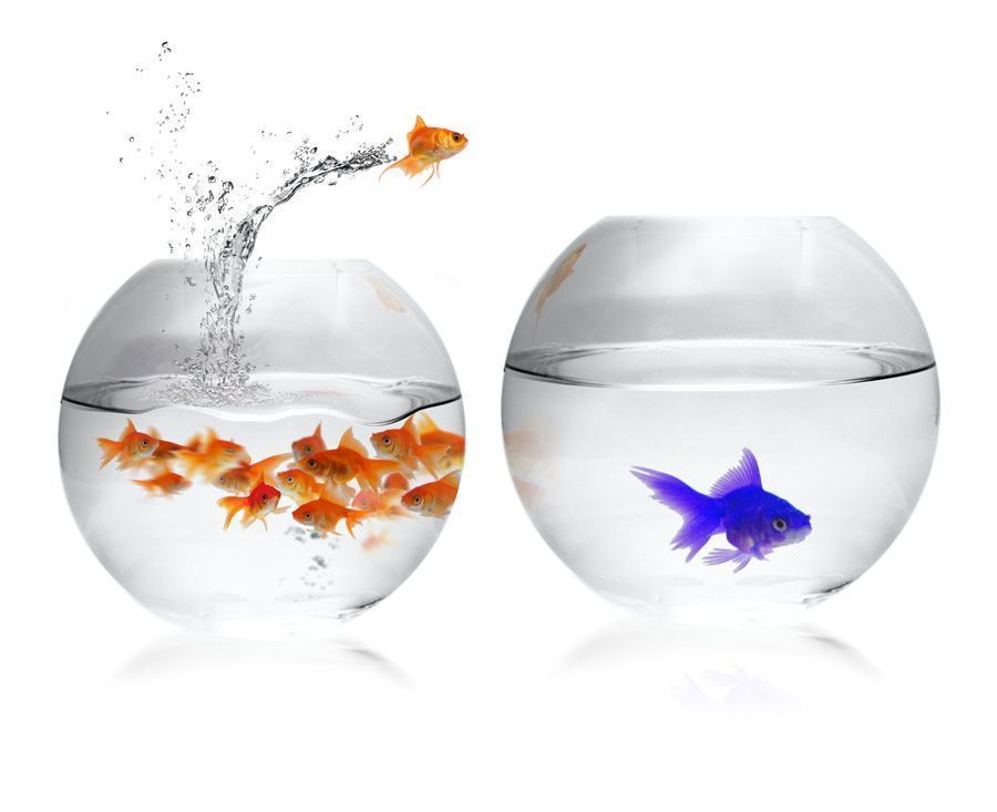 Poisson rouge humour for Aquarium bocal poisson rouge